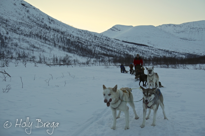 Arctic Dog Sledding