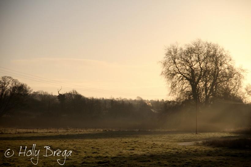 Dusk over Meadows